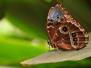 कानपुर में पर्यटकों के लिए तितली पार्क