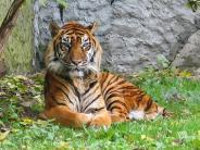 अंतरराष्ट्रीय टाइगर दिवस:उत्तर पूर्वी भारत के 4 प्रमुख टाइगर रिज़र्व क्षेत्र!