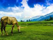 चलिए चलें धरती के स्वर्ग,गुलमर्ग की सबसे खूबसूरत यात्रा पर!
