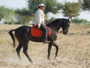 राजस्थान के इन 5 जगहों में लीजिये शाही खेल, घुड़सवारी के मज़े!