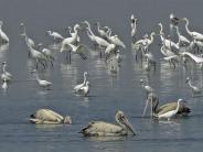 भारत के इन पक्षी अभ्यारण की जरूर करें यात्रा