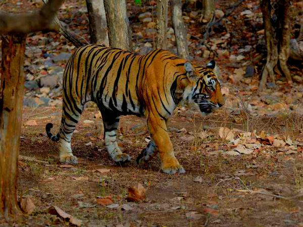 आइये कुछ तूफानी किया जाये, क्यों न भारत के इन जंगलों को ही विजिट किया जाये