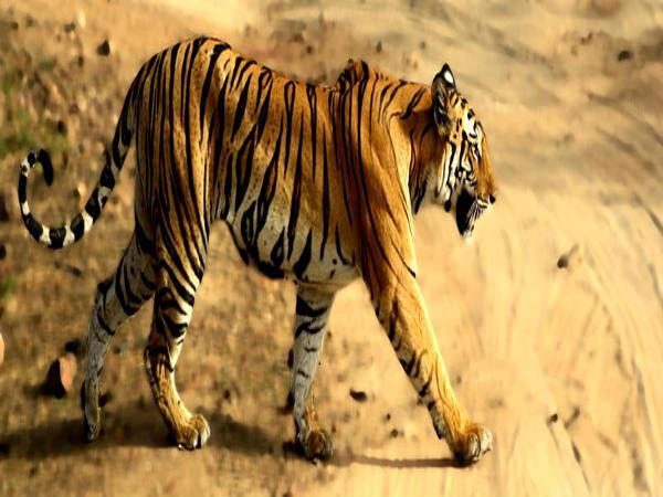 जानिये कैसे अपने आप में अनोखे हैं, भारत के ये टॉप 20 नेशनल पार्क