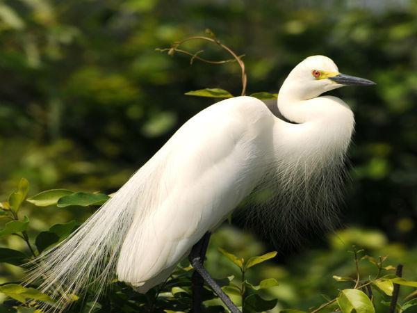 खूबसूरत पक्षियों