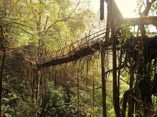 Living Bridge in Meghalaya