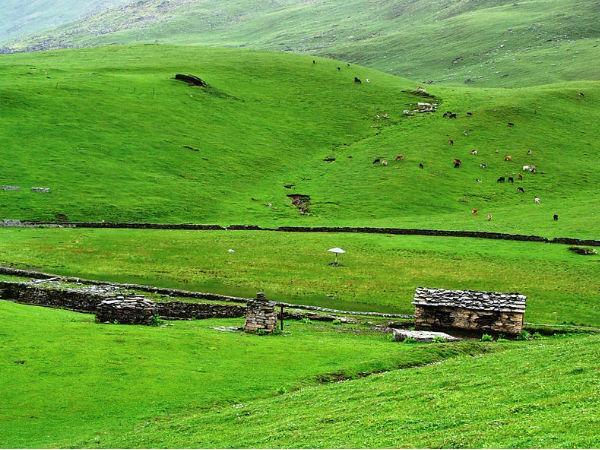 बुग्याल: हरे भरे घास की प्राकृतिक मखमली चादर!