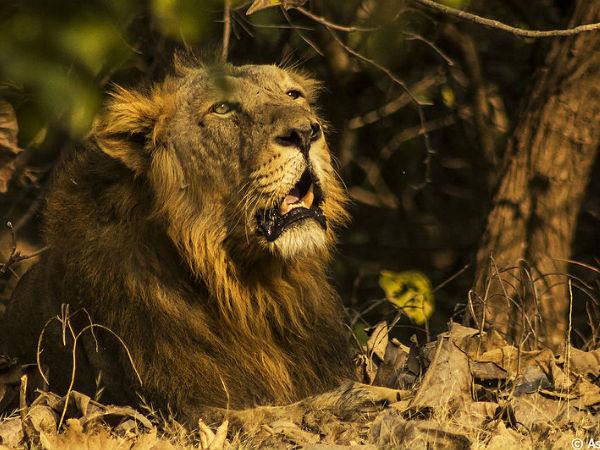 6 प्रमुख वन्य जीव राष्ट्रीय उद्यान!