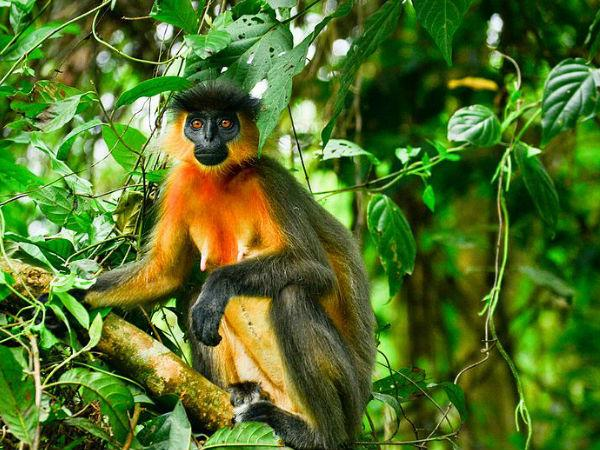 अगर आप प्रकृति से सच्चा प्रेम करते हैं तो भारत के इन 18 बायोस्फियर रिज़र्व की यात्रा करना न भूलें!