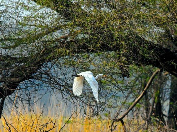 [हरियाणा में खूबसूरत पक्षियों की मधुर गुंजार: सुल्तानपुर राष्ट्रीय उद्यान!]