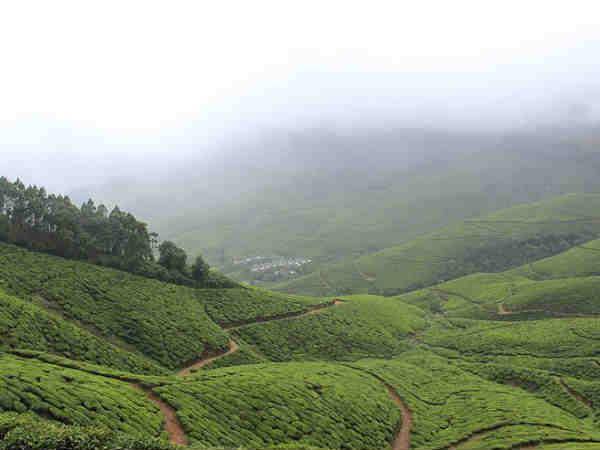 कोलुकुमलाई-दुनिया का सबसे ऊँचा चाय बगान