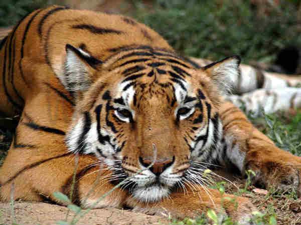 अगर हैं वन्य जीवों से प्यार..तो जीवन में एक बार जरुर करें वाइल्ड लाइफ पार्क्स की सैर