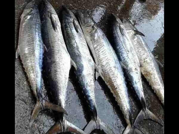 मुंबई का सबसे बड़ा मछली बाजार-भउचा धक्का