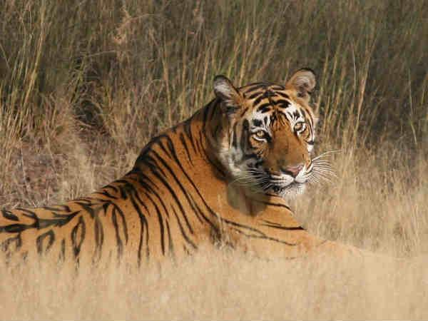 राजस्थान का राजसी ठाट-बाठ तो बहुत देख लिया..अब घूमे राजस्थान के नेशनल पार्क