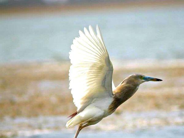 प्रकृति प्रेमियों के लिए अहमदाबाद के पास 8 सप्ताहांत द्वार