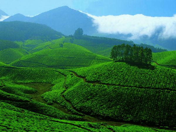 Munnar - the Hill Station of Kerala in Idukki hindi - Hindi Nativeplanet