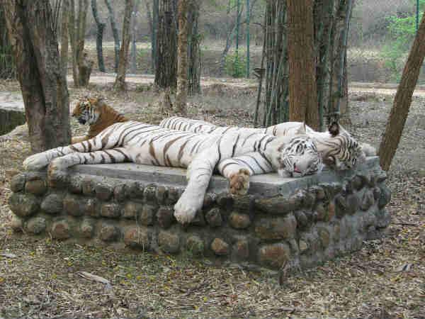प्रकृति से है प्यार और जंगली जीवों को देखने का है शौक तो जरुर जायें  बनरगट्टा नेशनल पार्क