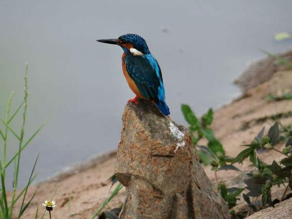 Sur Sarovar Bird Sanctuary