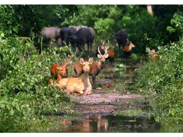 2017 में इन वन्य जीव पार्कों को पर्यटकों ने किया पसंद