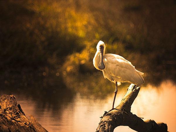 जरूर देखें महाराष्ट्र के ये खूबसूरत पक्षी अभ्यारण्य