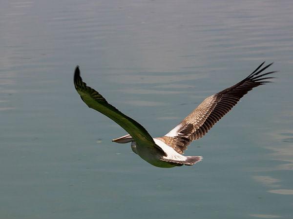 प्रवासी पक्षियों</a></strong> को अपनी ओर आकर्षित करता है, यहां आप मंदिर देखने के बाद कई <strong><a href=