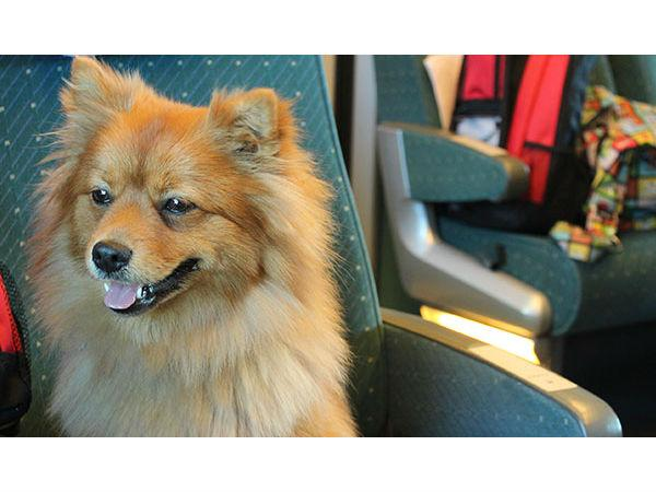 Want To Travel With Your Dog In Indian Railways
