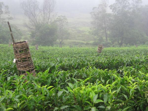 चाय के बगानों</a></strong> के लिए जाना जाता है। अंबानाद हिल्स घूमने आने वाले पर्यटक यहां यहां चाय के बगानों के साथ साथ, सुंदर पहाड़ियां, जलाशय, और <strong><a href=