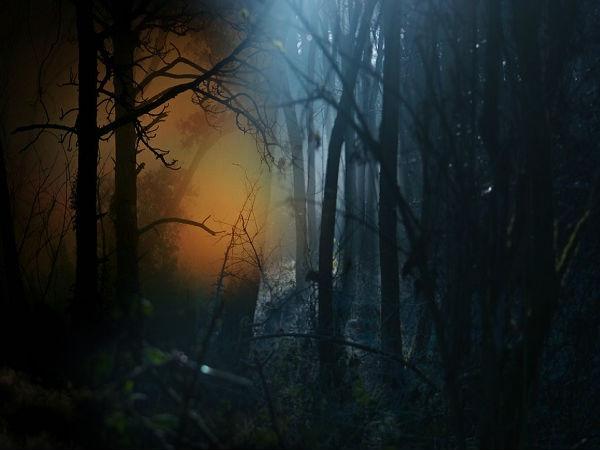ओडिशा के चुनिंदा सबसे प्रेतवाधित स्थान, रहस्यों से भरे हैं पेड़