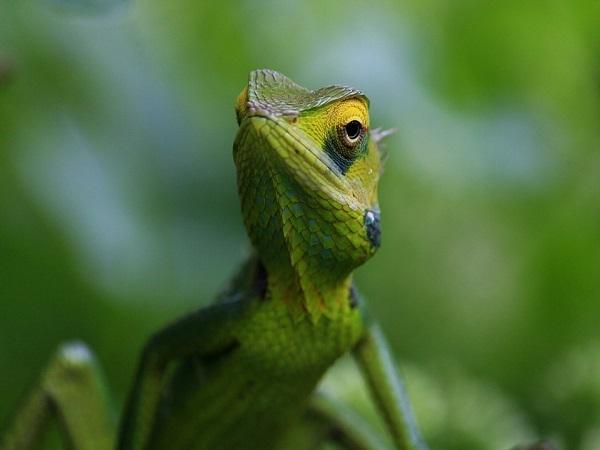 इस दुर्लभ जीव ने छत्तीसगढ़ को दिलाई नई पहचान