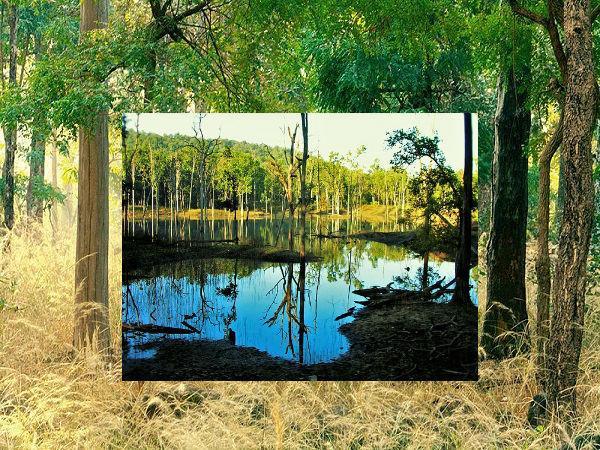 मध्य प्रदेश : मोगली के घर का पता चाहिए तो आएं इस घने जंगल में
