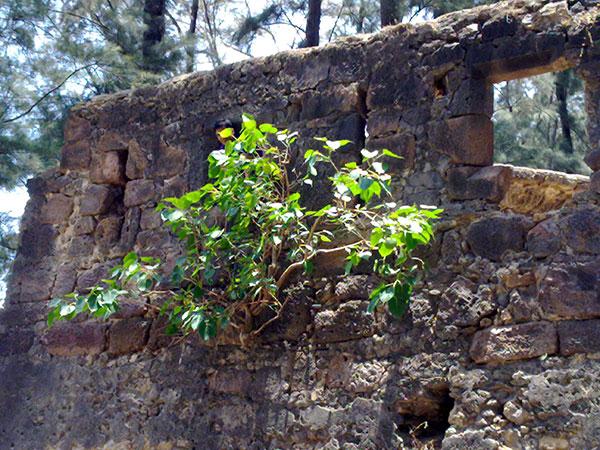 केलवा किला