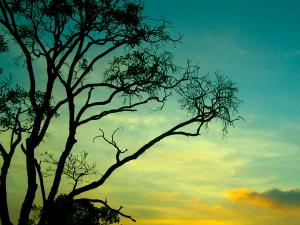 Things Know About Yercaud Hindi