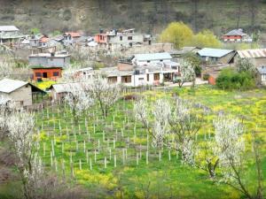 Shoghi In Himachal Pradesh Hindi