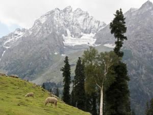 Harmukh Peak Trek Jammu Kashmir Hindi