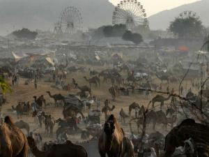 Sonepur Cattle Fair Hindi