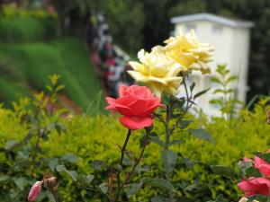 Rose Gardens India Hindi