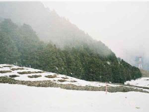 Delhi Auli Travel Guide