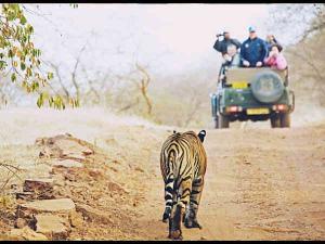 Up Close With Wildlife At The Rajaji National Park