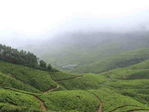 Kolukkumalai Worlds Highest Tea Plantation