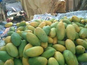 Places To Go During This Mango Season Hindi