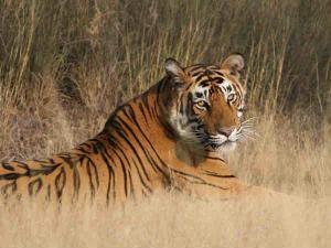 Top 5 National Parks Rajasthan Hindi