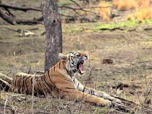 Jungle Safaris In India Hindi