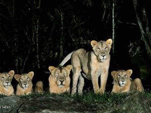 Places Proposed Night Safari India Hindi