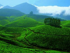 Munnar The Hill Station Kerala Idukki Hindi