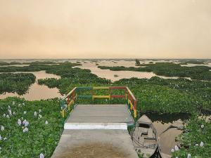 Harike Wetland Punjab Will Be Your Next Holiday Destination