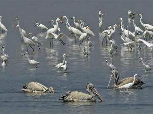 Visit These 7 Less Explored Bird Sanctuaries Of India Hindi