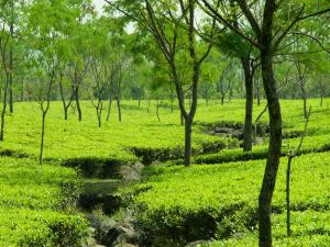 Stunning Hill Stations West Bengal Perfect A Dreamy Vacation Hindi