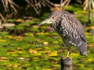 Bengaluru Mandagadde Bird Sanctuary Chirpy Ride