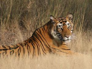 Enjoy The Best Wildlife Road Trip From Jaipur Ranthambore Hindi