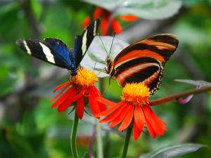 Witness The Winged Beauties At These Butterfly Parks India Hindi