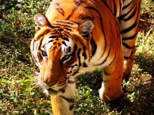 Top 6 Zoos India That You Cannot Miss Hindi